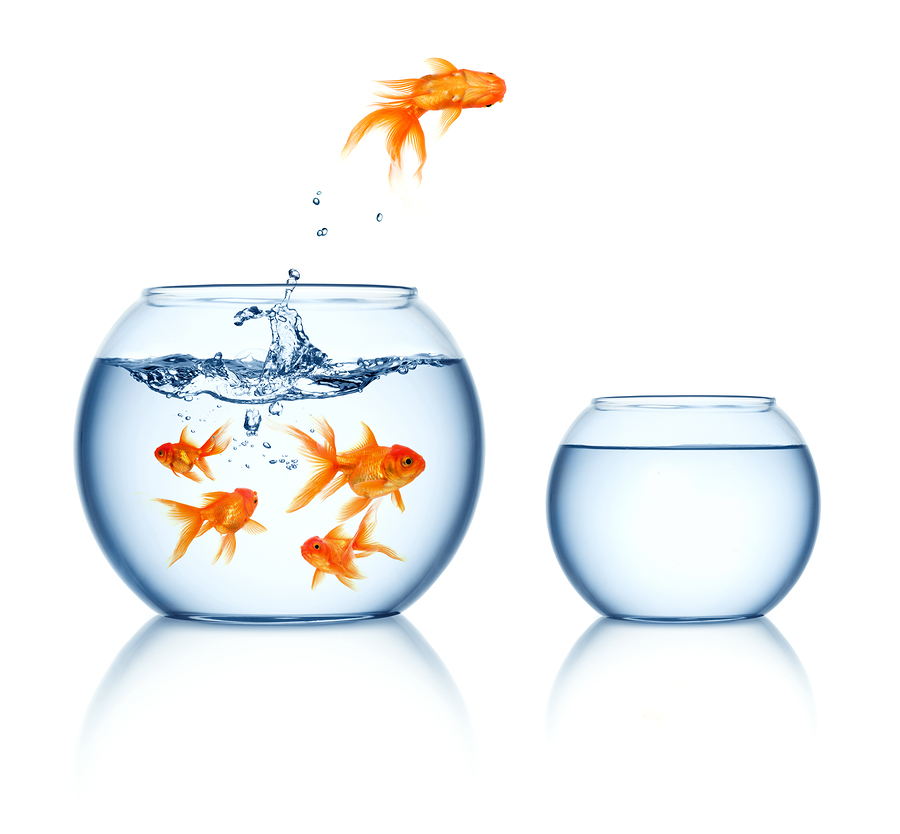bigstock-A-goldfish-jumping-out-of-the-12357584
